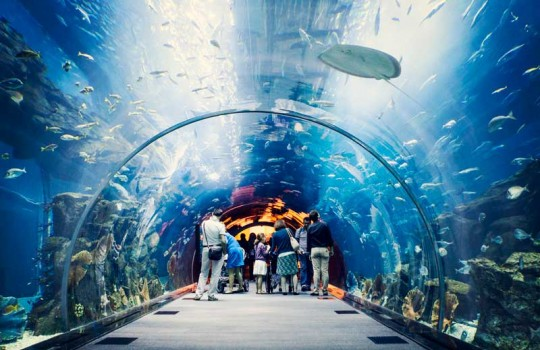 files-news-aquarium-dubai[5ade42bfb56955f75c11a3dba722353f].jpg