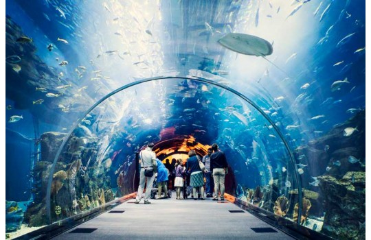 files-news-aquarium-dubai-5ade42bfb56955f75c11a3dba722353f.jpg